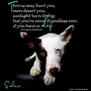 ... Turn To Fog, But You're Never Friendless Ever, If You Have A Dog