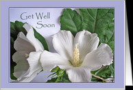 Get Well Soon Cards For Surgery from Greeting Card Universe