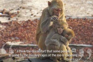 Quotes That Will Change What You Think About Zoos