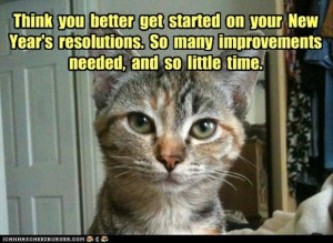 Funny new years resolutions, funny cat