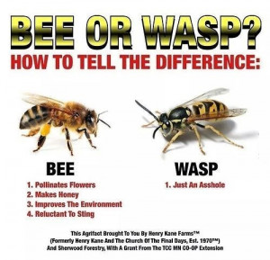 funny-picture-bee-vs-wasp