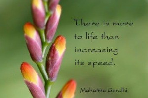Quotes of Life Gandhi Flower buds