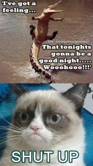 GrumpyCat #meme For more Grumpy Cat quote, humor and meme visit www ...