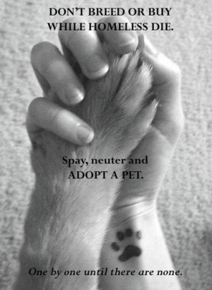 Go Back > Gallery For > Animal Adoption Quotes
