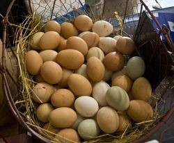 put all my eggs in one basket