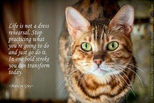 ... inspirational advice borrowed from my feline friends on just how to do