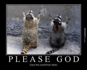 funny raccoons praying