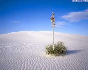 Sfondi >> Natura >> Sfondi Deserto (42)