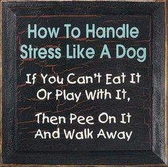 ... funny-quotes/ stress free, word of wisdom, dogs, funni, motto, stress