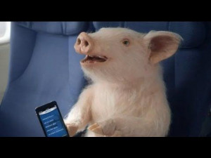 Maxwell the GEICO Pig is flying...yup pigs are now flying. And don't ...
