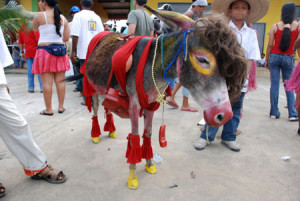 ://www.funnyjunksite.com/pictures/funny-animal-pictures/funny-donkey ...