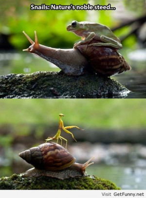 Awesome nature - Funny Pictures, Funny Quotes, Funny Memes, Funny Pics ...