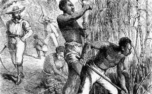 Sugar Plantation Slaves 1858 engraving of slaves in the British West ...