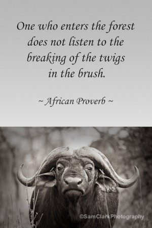 Wildlife inspirational quotes quotesgram - Animal pak motivational quotes ...