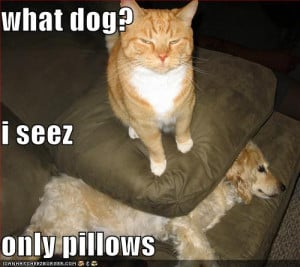 funny_pictures_cat_hides_dog_under_a_pillow_Funny_cats_and_dogs_pics ...