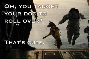 german shepherd funny captions