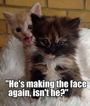 Cute Kittens Quotes Cute quotes_005