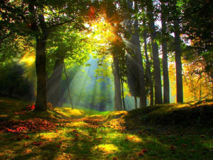 autumn forest sunrise natural desktop wallpaper download autumn forest ...