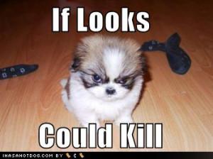 jpg funny dog costume jpg big nose dog jpg funny dog pictures angry ...