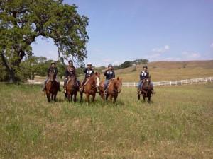 Trail Riding Horses