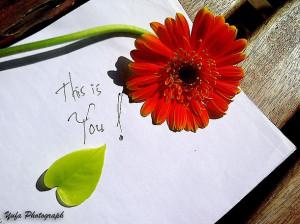 Favim.com-love-cute-flower-quotes-photograph-471541.jpg