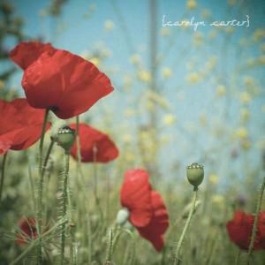 Poppies & Quotes