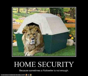 Funny Lions Cool Pictures