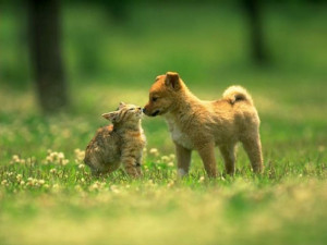 brown colour beautiful cat and dog cat and dog picture