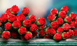 valentines day rose picture for him on rose day 2015