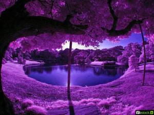 nice Purple Color Tree