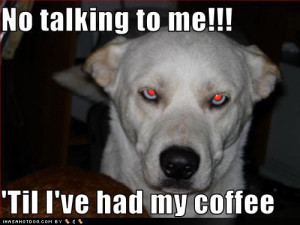 photo funny-dog-pictures-talking-coffee.jpg