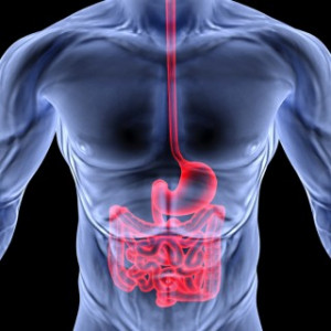 ... Components of the East-West Approach to Gastrointestinal Disorders