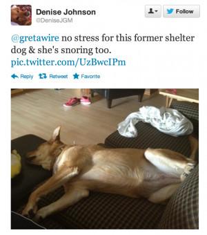 Shelter Dog Quotes Of former shelter dog