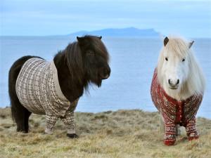 tdy-130124-shetland-ponies-cardigans1.photoblog600.jpg