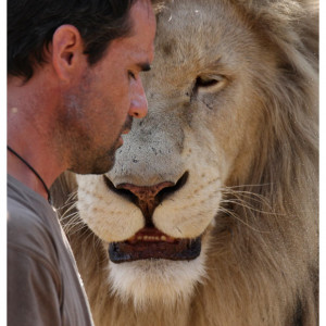 ... Kevin Richardson plays with white lions at a game park in South Africa