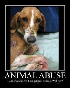 Animal Abuse Facts | Animal Abuse Statistics Page 7 Images More