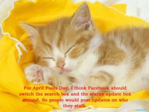 cat meme quote funny humor grumpy computer facebook kitten wallpaper ...