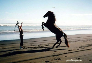 ... horse lovers php target _blank click to get more horse lovers comments