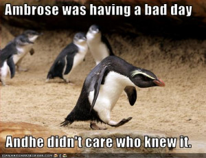 funniest penguin picture of the day, funny penguin picture of the day
