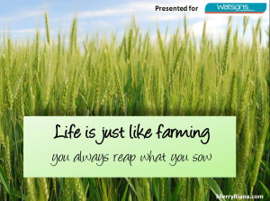Life Is Just Like Farming – you will always reap what you sow
