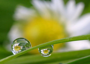 Dewdrop - A short story with an even deeper meaning and i just love ...