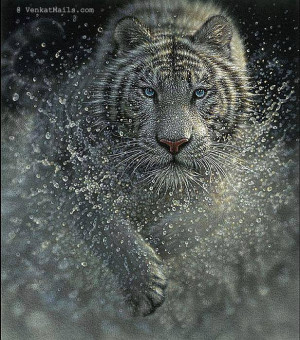 Tiger - the most beautiful animal of the world. The strength and his ...
