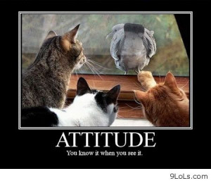Funny Pictures Funny Quotes Sayings Funny Kids Funny Animals Humor ...