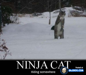 ... Hilarious Karate Animal Moves Laugh Funny Images Funny Day Fun Animals