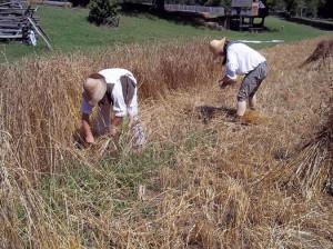 Colonial Farm Life Farming encompasses the life
