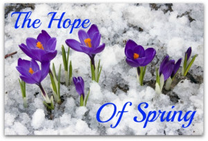 The First Sparrow Of Spring! The Year Beginning With Younger Hope Than ...
