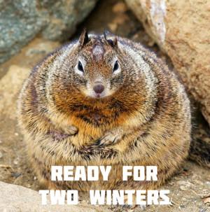 Funny Fat Squirrels
