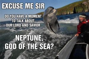 funny dolphin pictures