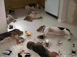 Drunk Animals