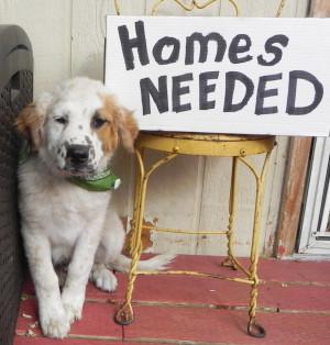Colorado Puppy Rescue- Homes Needed (1)